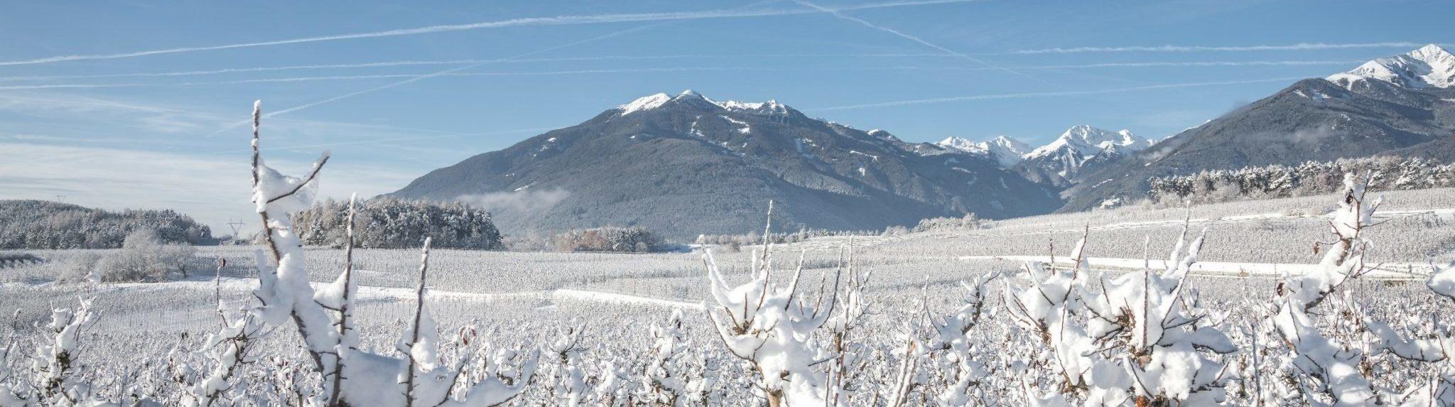 winter Raas
